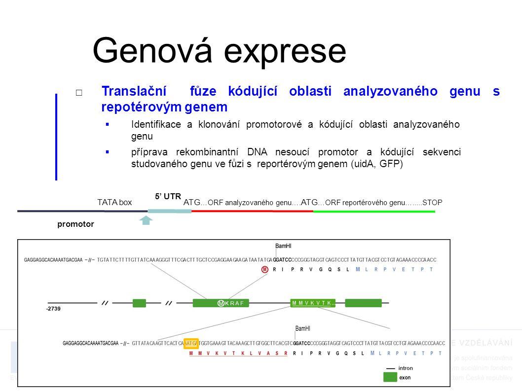 Genová exprese Translační fůze kódující oblasti analyzovaného genu s repotérovým genem.