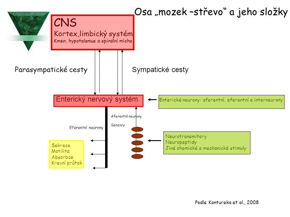 """CNS Osa """"mozek –střevo a jeho složky Kortex,limbický systém"""