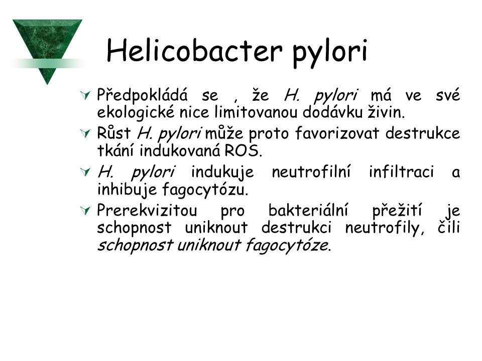 Helicobacter pylori Předpokládá se , že H. pylori má ve své ekologické nice limitovanou dodávku živin.