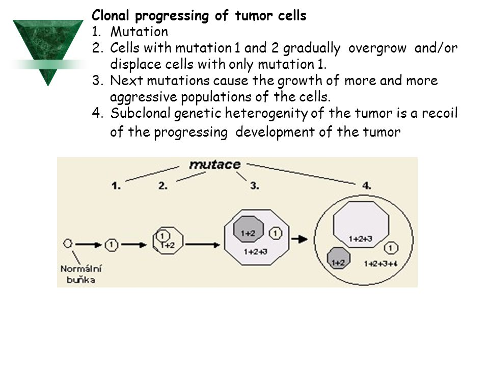Clonal progressing of tumor cells Mutation