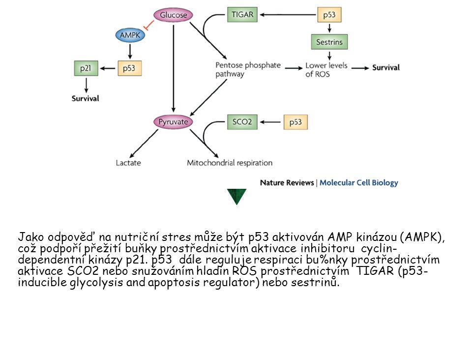 Jako odpověď na nutriční stres může být p53 aktivován AMP kinázou (AMPK), což podpoří přežití buňky prostřednictvím aktivace inhibitoru cyclin-dependentní kinázy p21.