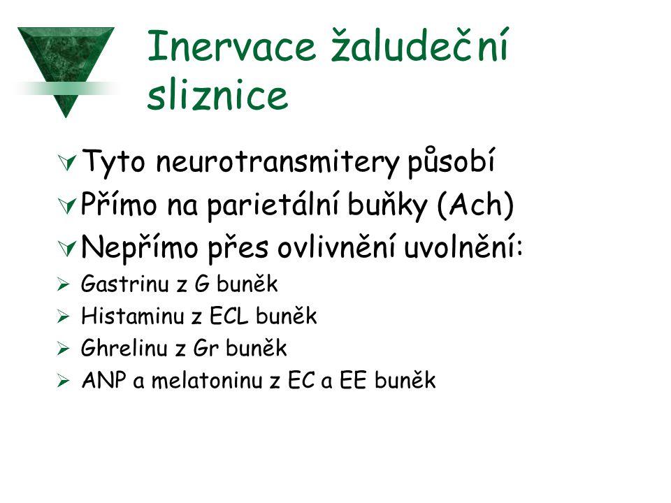 Inervace žaludeční sliznice