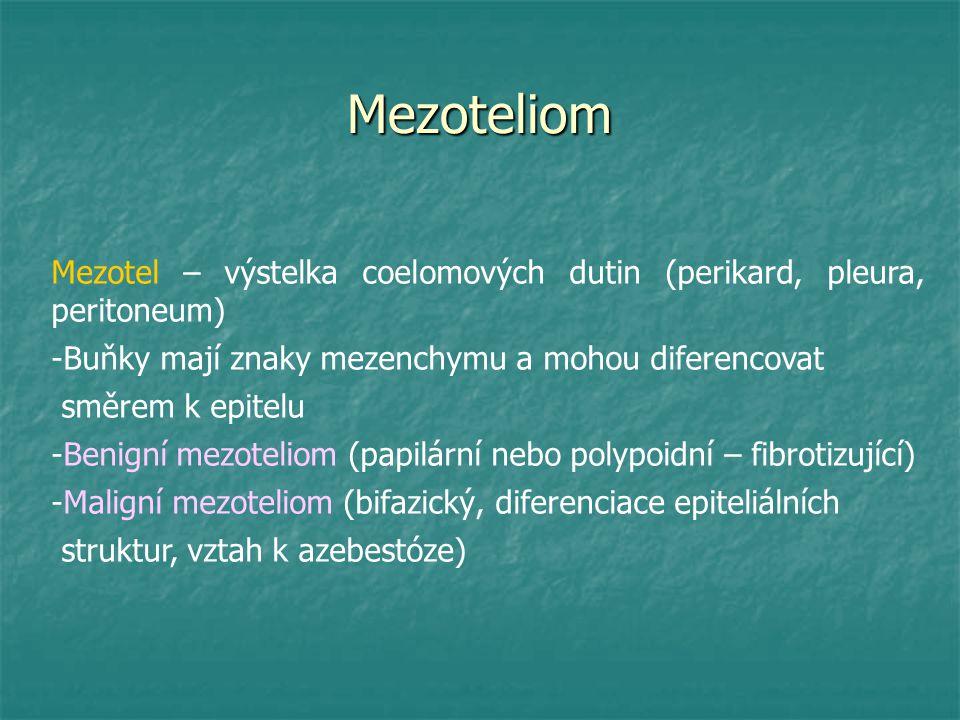 Mezoteliom Mezotel – výstelka coelomových dutin (perikard, pleura, peritoneum) Buňky mají znaky mezenchymu a mohou diferencovat.