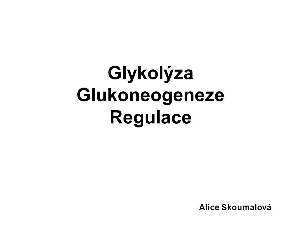 Glykolýza Glukoneogeneze Regulace