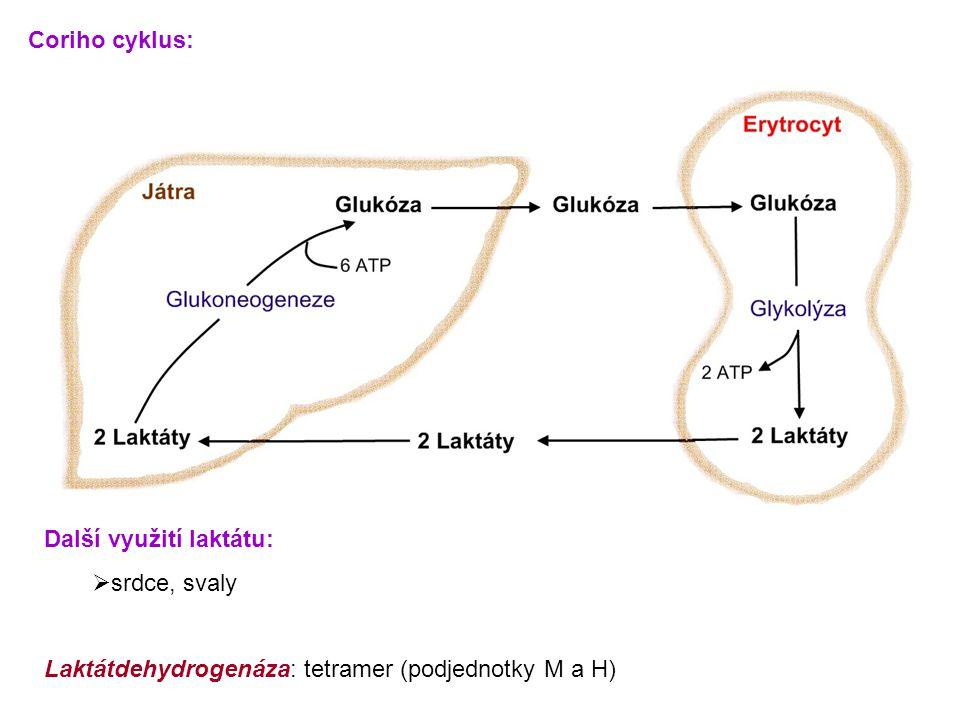 Coriho cyklus: Další využití laktátu: srdce, svaly.