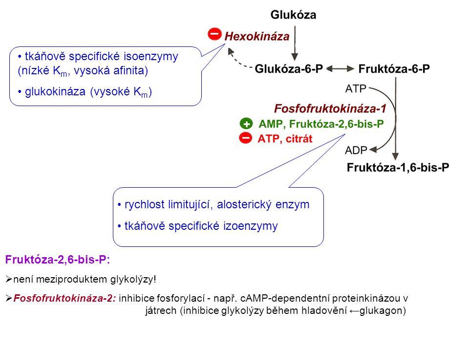 tkáňově specifické isoenzymy (nízké Km, vysoká afinita)