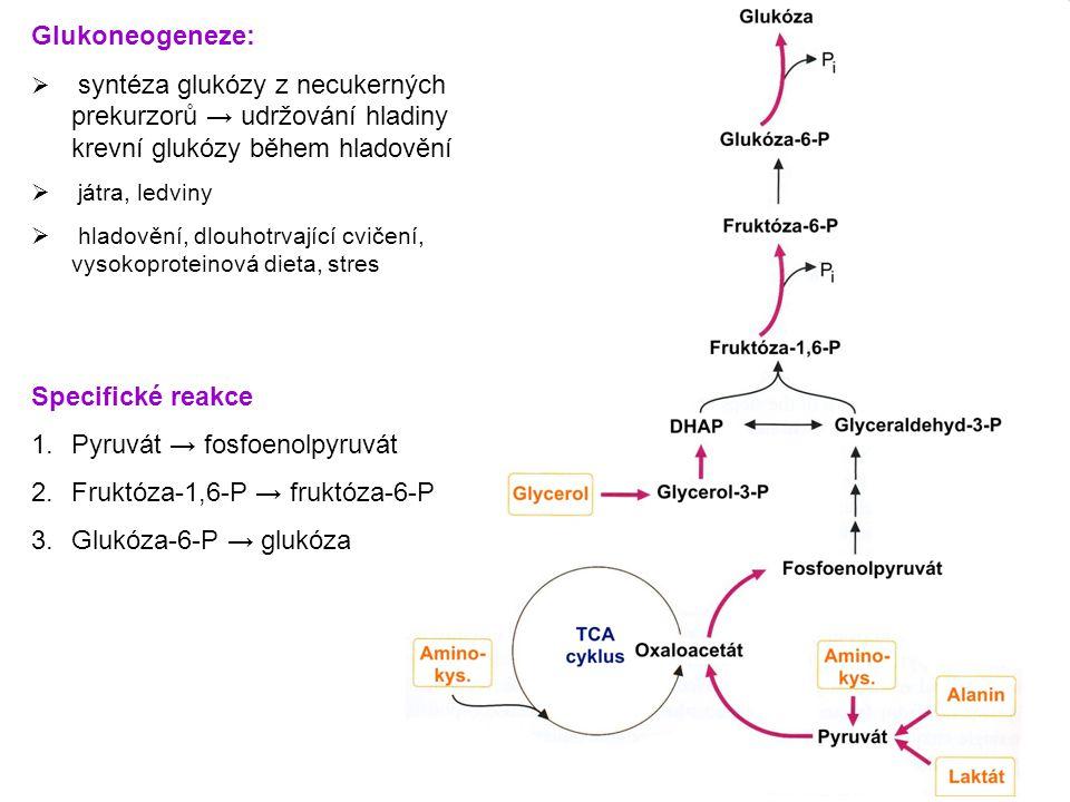 Pyruvát → fosfoenolpyruvát Fruktóza-1,6-P → fruktóza-6-P