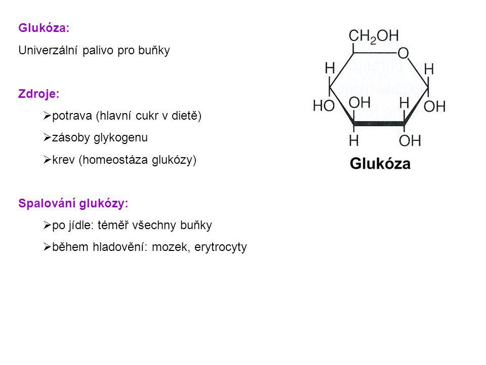 Glukóza: Univerzální palivo pro buňky. Zdroje: potrava (hlavní cukr v dietě) zásoby glykogenu. krev (homeostáza glukózy)