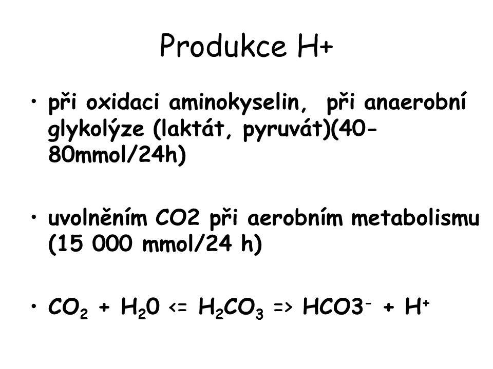 Produkce H+ při oxidaci aminokyselin, při anaerobní glykolýze (laktát, pyruvát)(40-80mmol/24h)