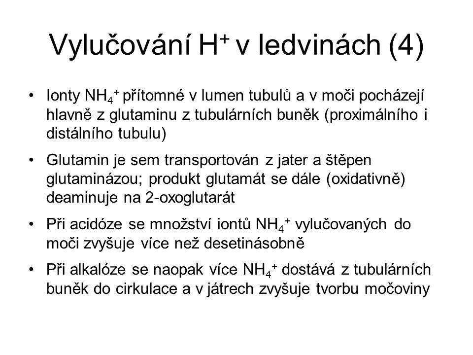 Vylučování H+ v ledvinách (4)