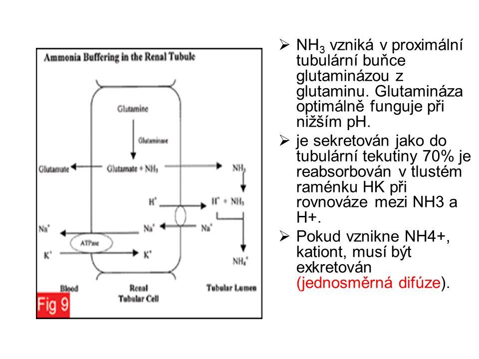 NH3 vzniká v proximální tubulární buňce glutaminázou z glutaminu