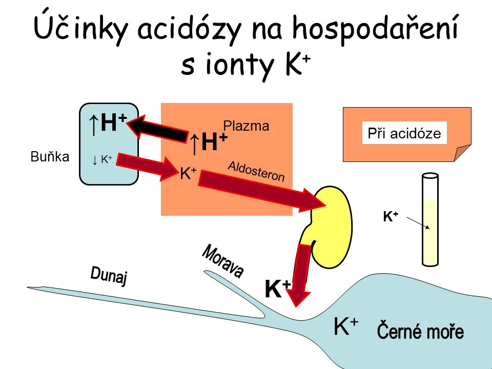 Účinky acidózy na hospodaření s ionty K+