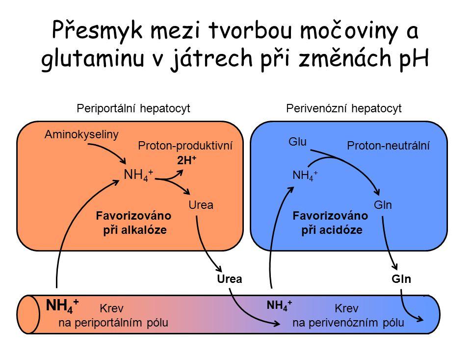Přesmyk mezi tvorbou močoviny a glutaminu v játrech při změnách pH