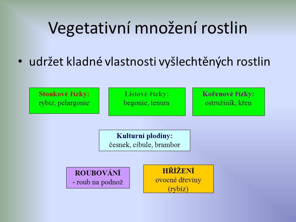 Vegetativní množení rostlin