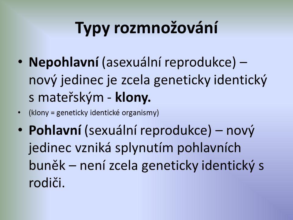Typy rozmnožování Nepohlavní (asexuální reprodukce) – nový jedinec je zcela geneticky identický s mateřským - klony.