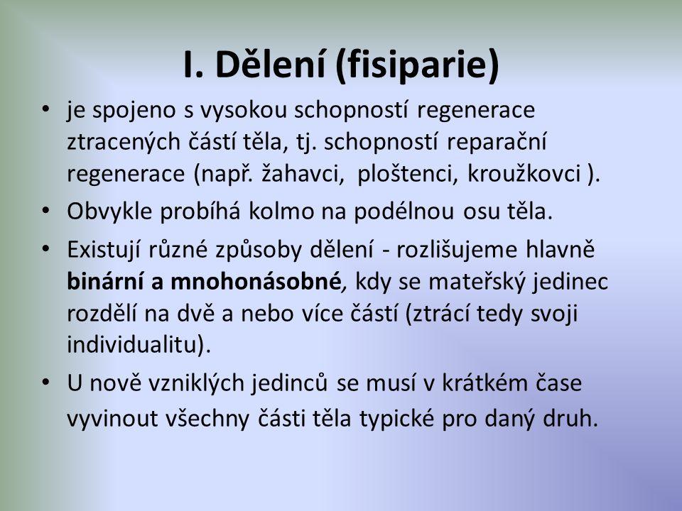 I. Dělení (fisiparie)