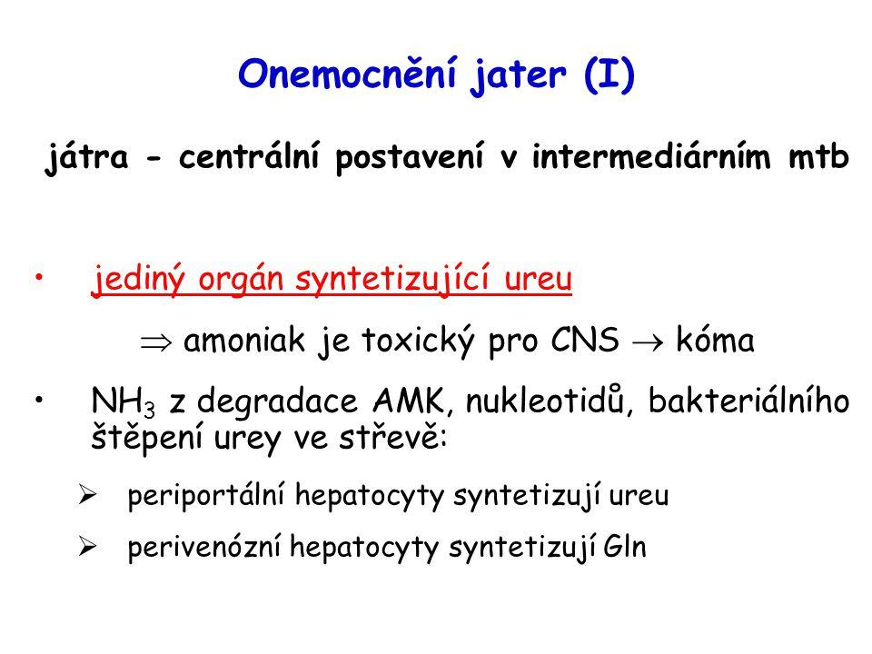 játra - centrální postavení v intermediárním mtb