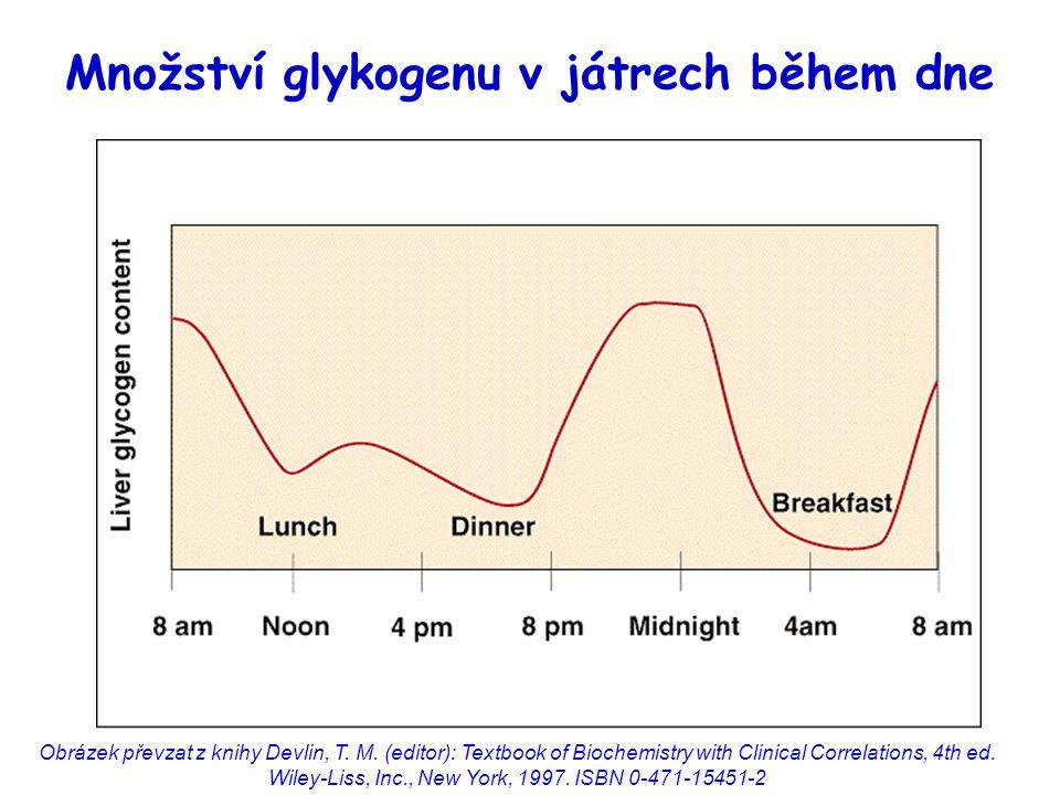 Množství glykogenu v játrech během dne