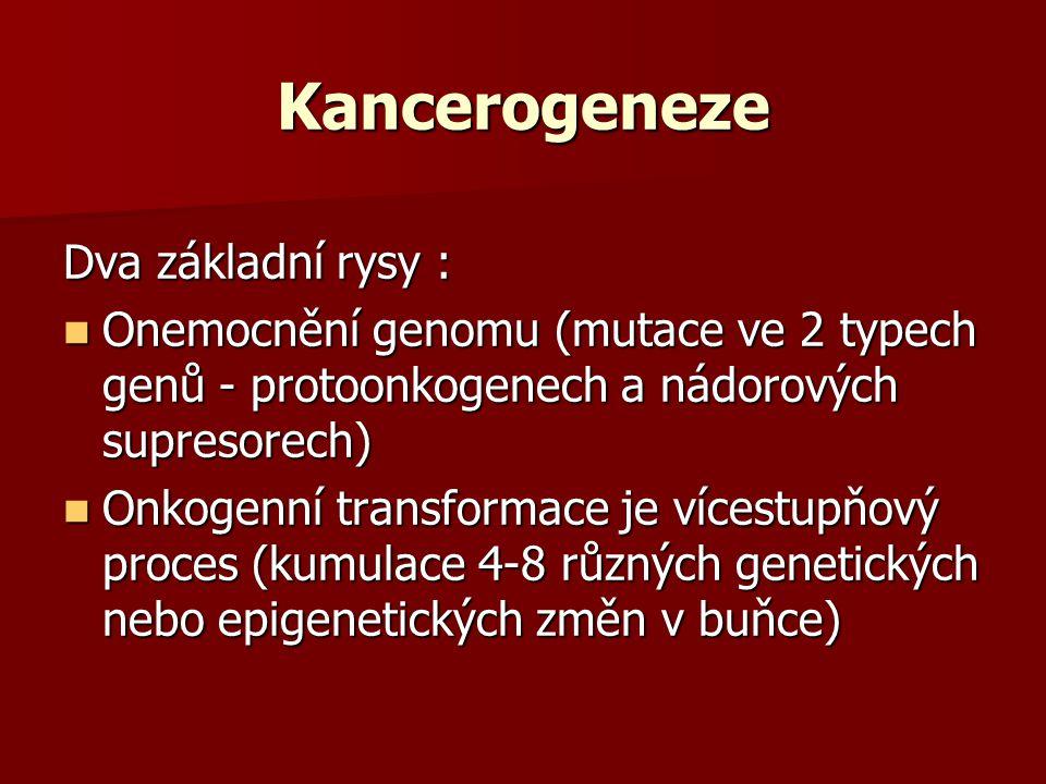 Kancerogeneze Dva základní rysy :
