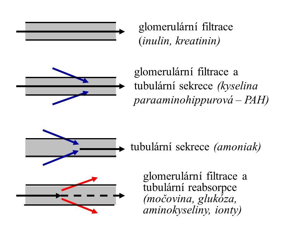 glomerulární filtrace (inulin, kreatinin)