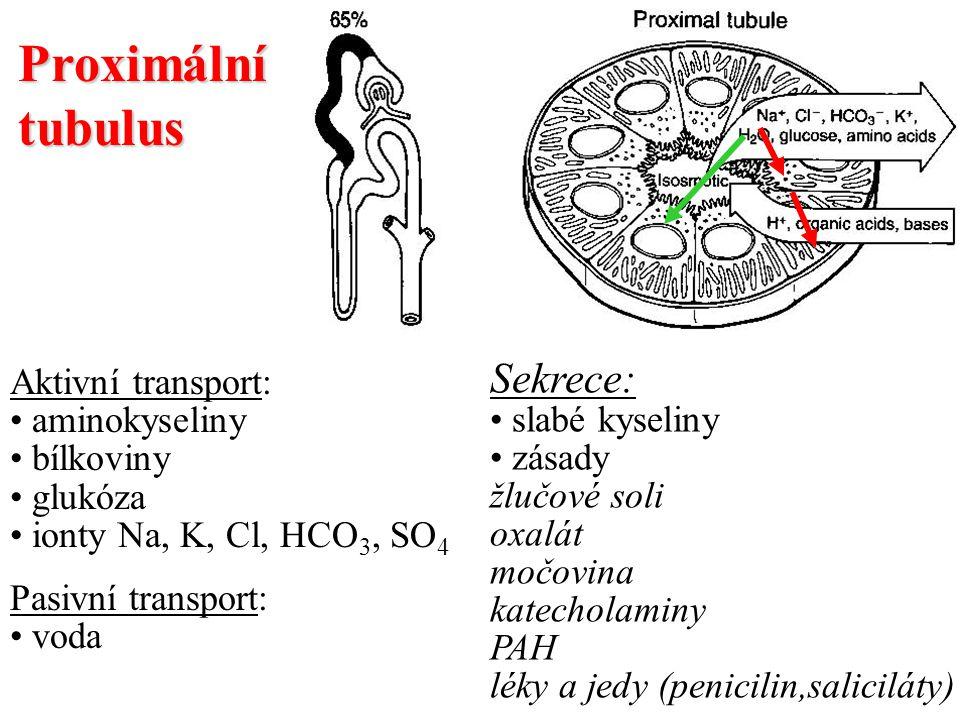 Proximální tubulus Sekrece: Aktivní transport: slabé kyseliny