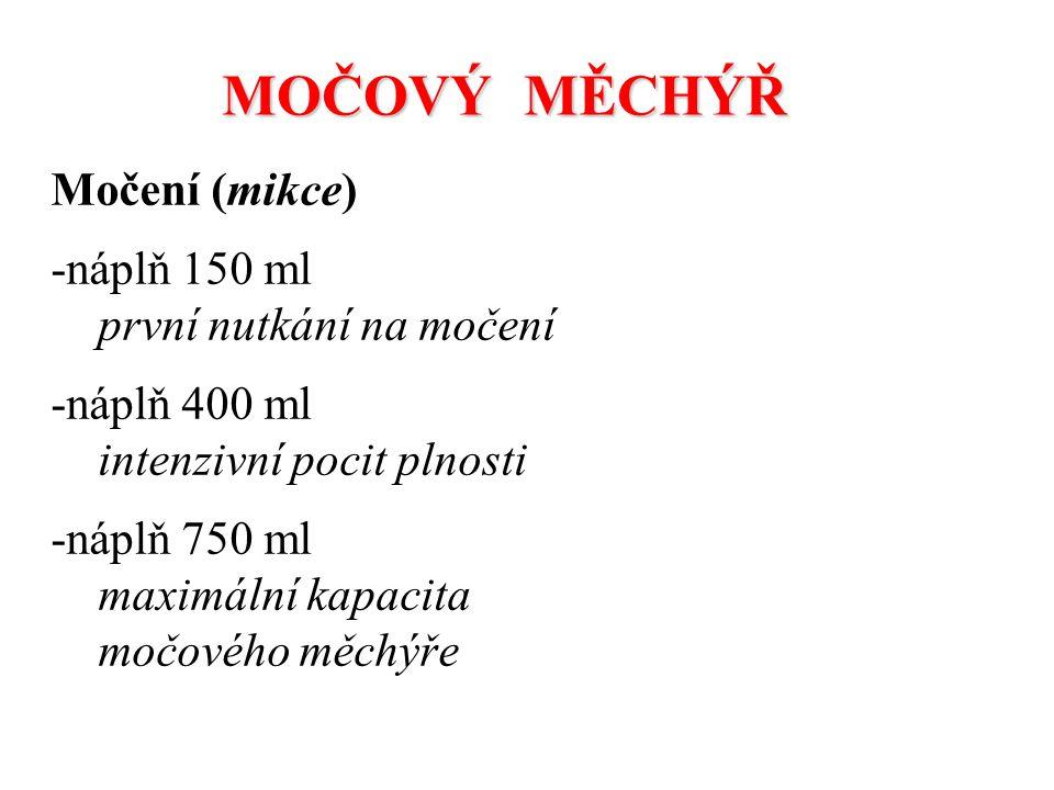 MOČOVÝ MĚCHÝŘ Močení (mikce) náplň 150 ml první nutkání na močení