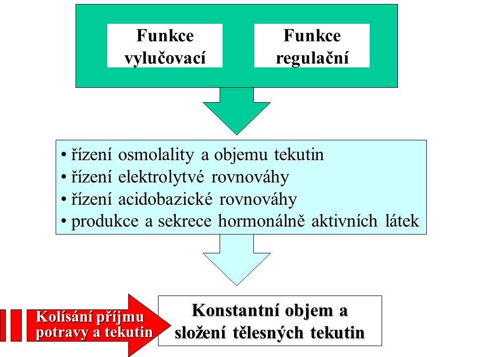 Konstantní objem a složení tělesných tekutin
