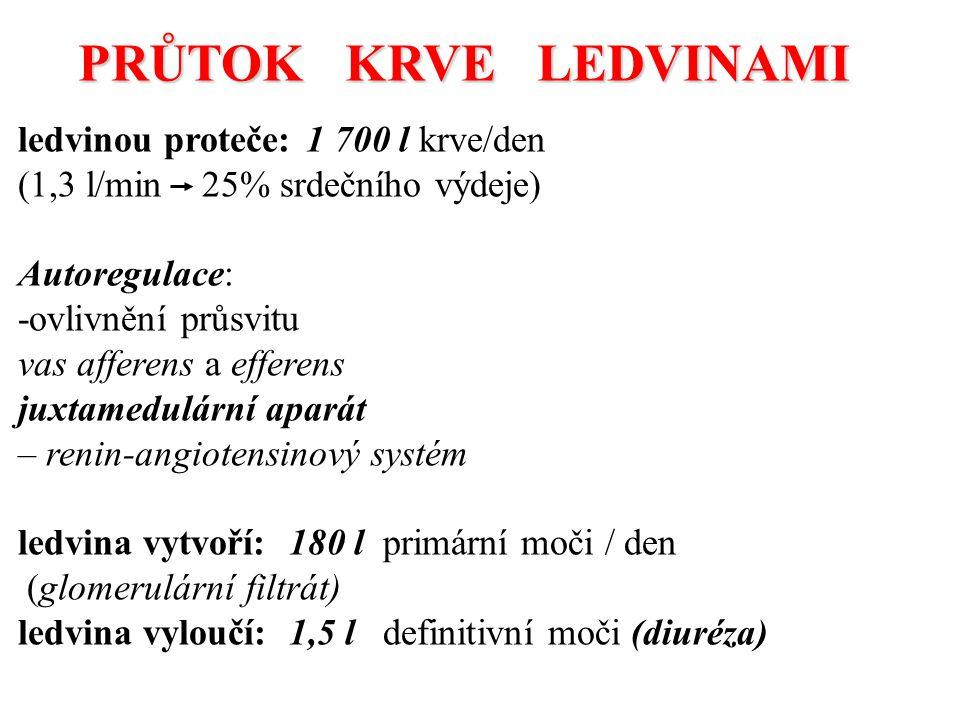 PRŮTOK KRVE LEDVINAMI ledvinou proteče: 1 700 l krve/den