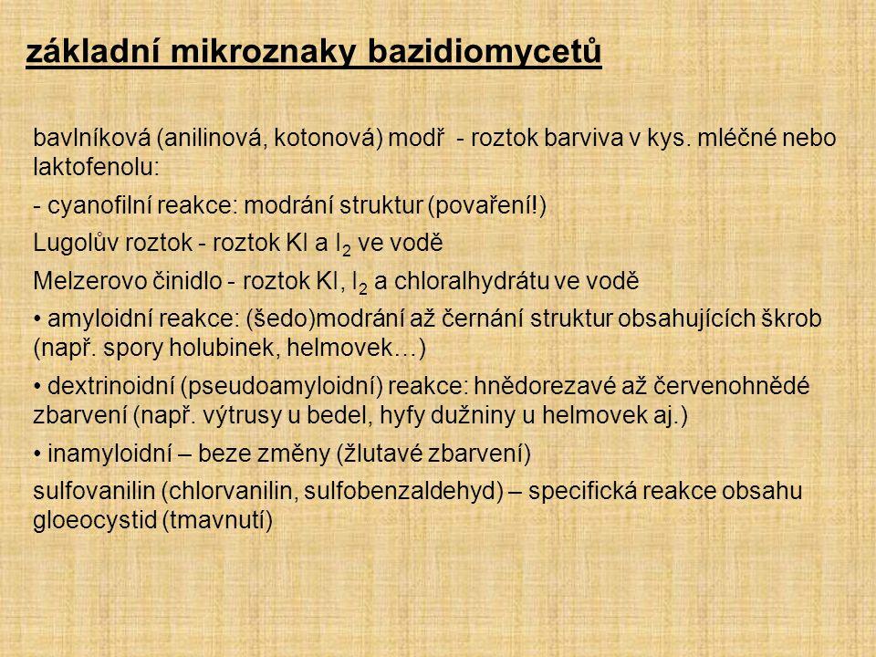 základní mikroznaky bazidiomycetů