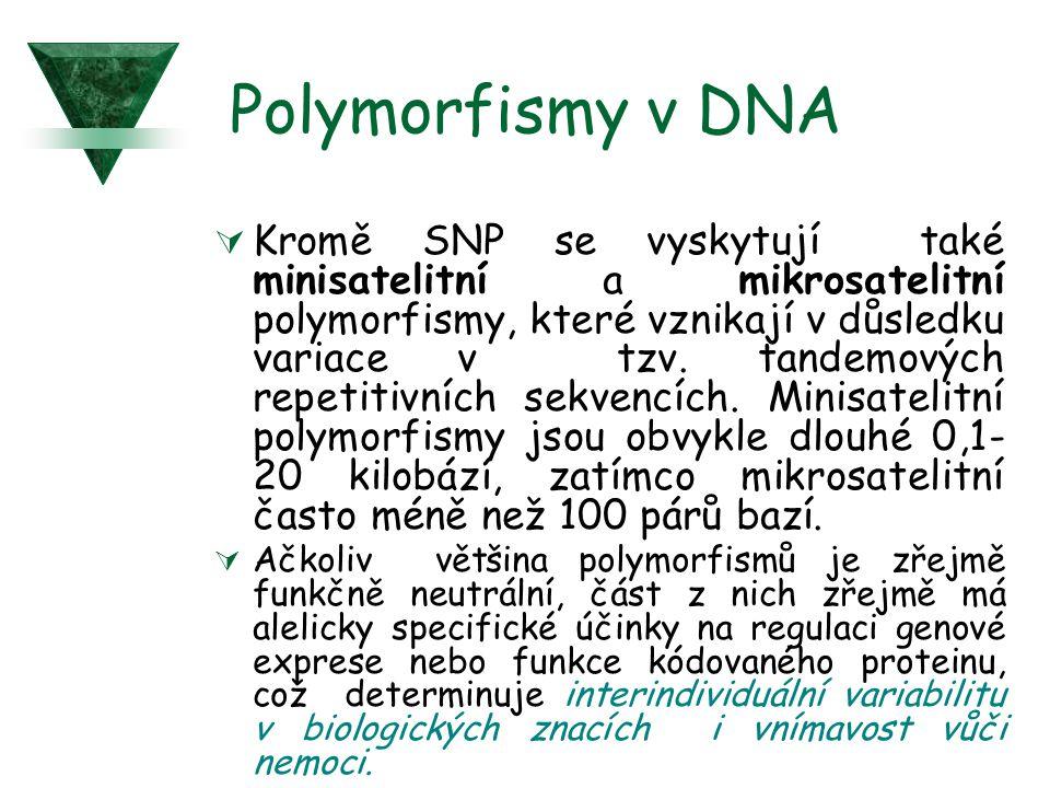 Polymorfismy v DNA
