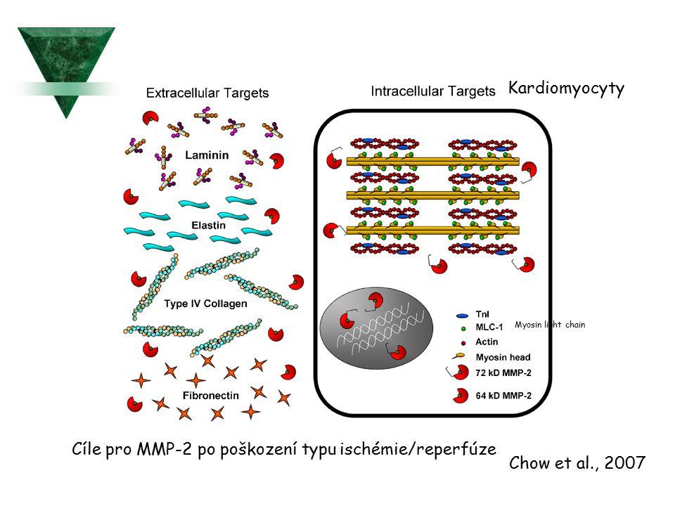 Cíle pro MMP-2 po poškození typu ischémie/reperfúze Chow et al., 2007