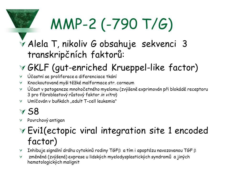 MMP-2 (-790 T/G) Alela T, nikoliv G obsahuje sekvenci 3 transkripčních faktorů: GKLF (gut-enriched Krueppel-like factor)