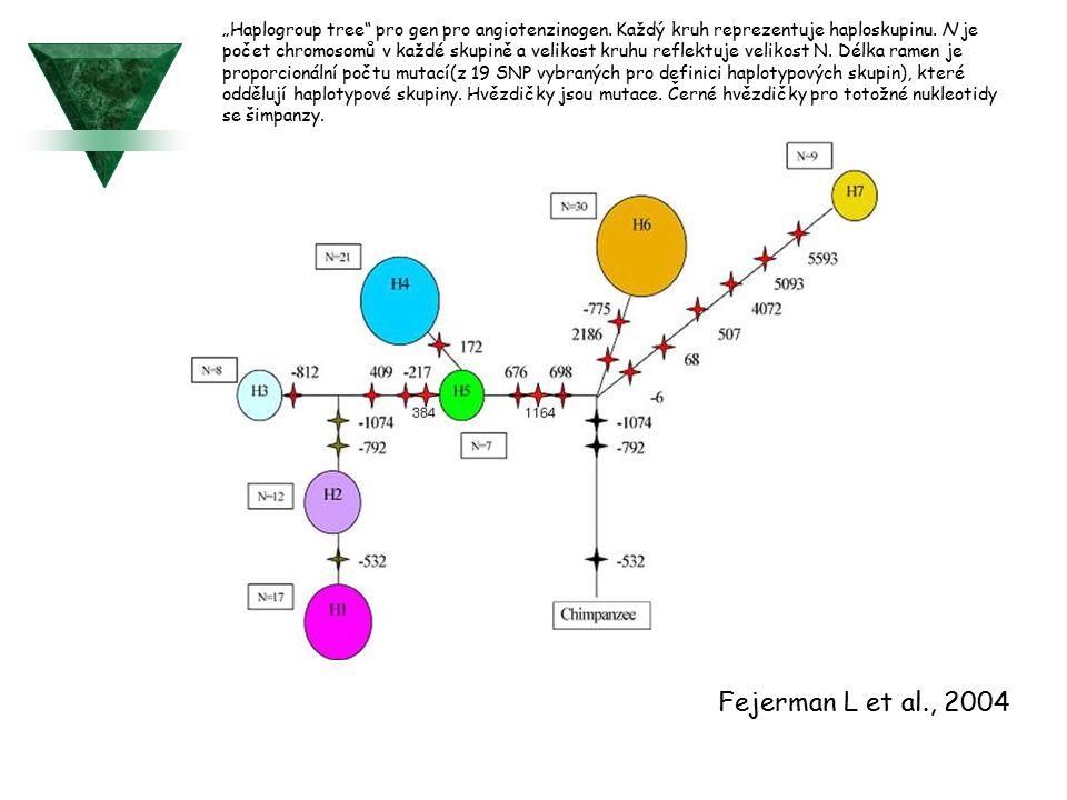 """Haplogroup tree pro gen pro angiotenzinogen"