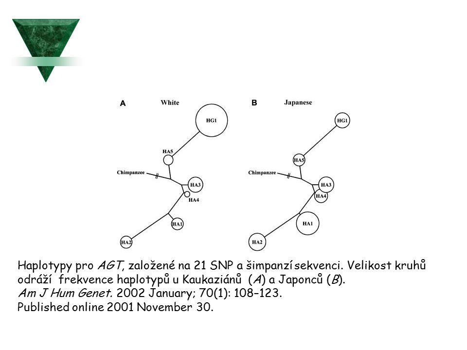 Haplotypy pro AGT, založené na 21 SNP a šimpanzí sekvenci