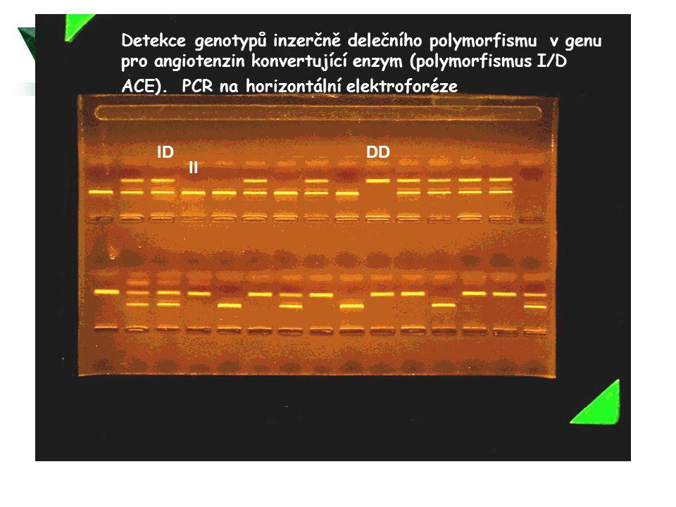 Detekce genotypů inzerčně delečního polymorfismu v genu