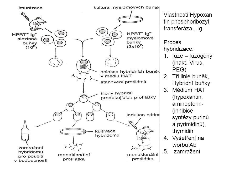 Vlastnosti:Hypoxantin phosphoribozyl transferáza-, Ig-