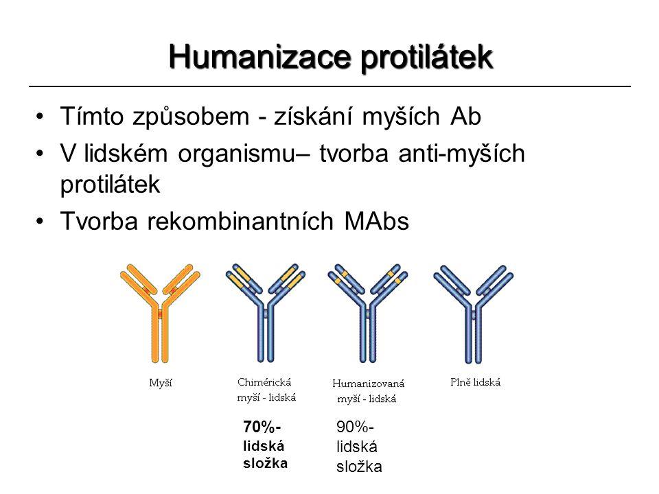 Humanizace protilátek
