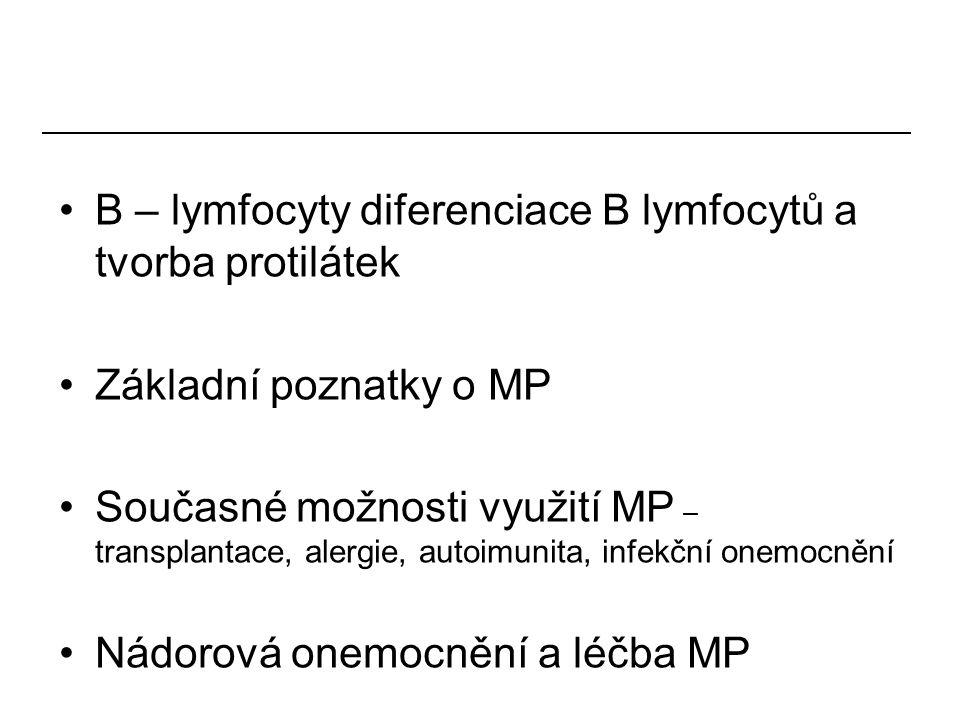 B – lymfocyty diferenciace B lymfocytů a tvorba protilátek