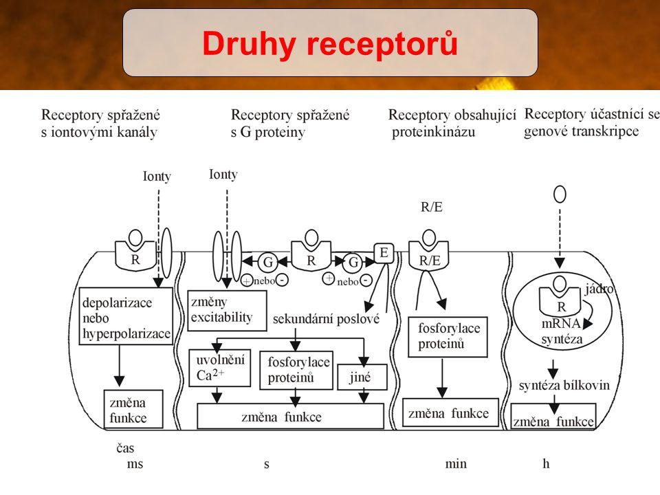 Druhy receptorů Ter. index – čím více se blíží 1 tím je léčivo nebezpečnější.