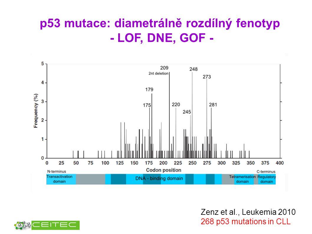 p53 mutace: diametrálně rozdílný fenotyp