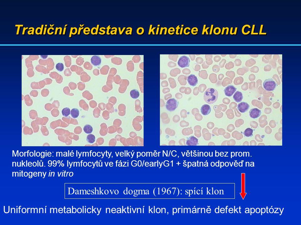 Tradiční představa o kinetice klonu CLL