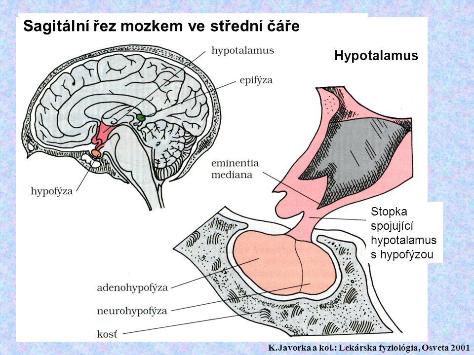 Sagitální řez mozkem ve střední čáře