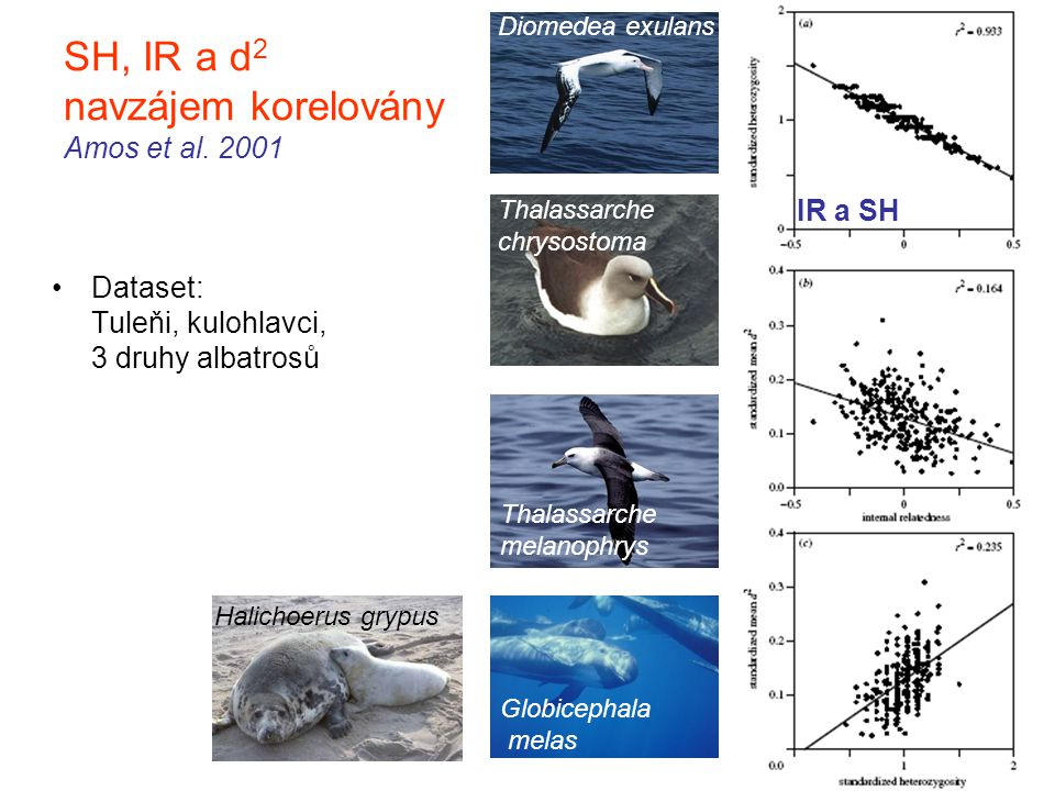 SH, IR a d2 navzájem korelovány Amos et al. 2001