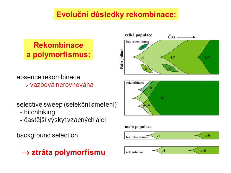 Evoluční důsledky rekombinace:
