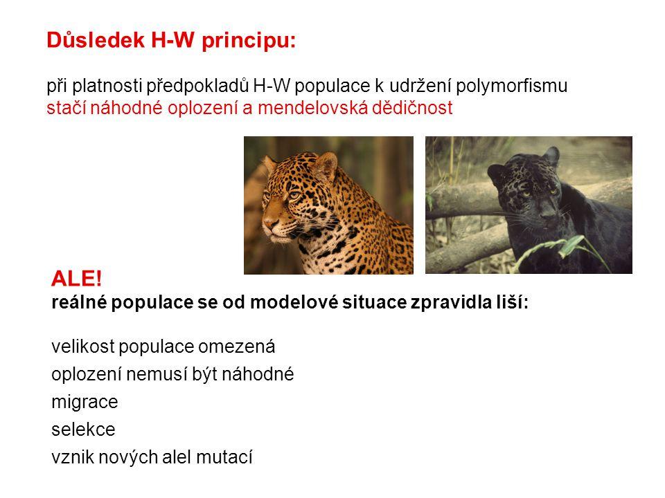 Důsledek H-W principu: