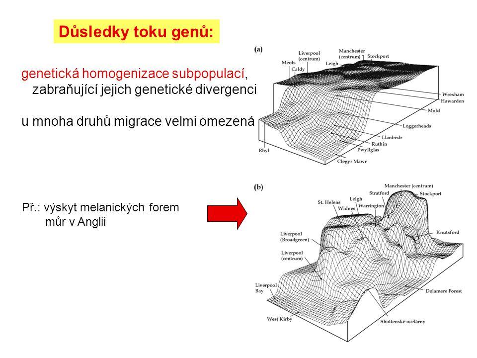 Důsledky toku genů: genetická homogenizace subpopulací, zabraňující jejich genetické divergenci.