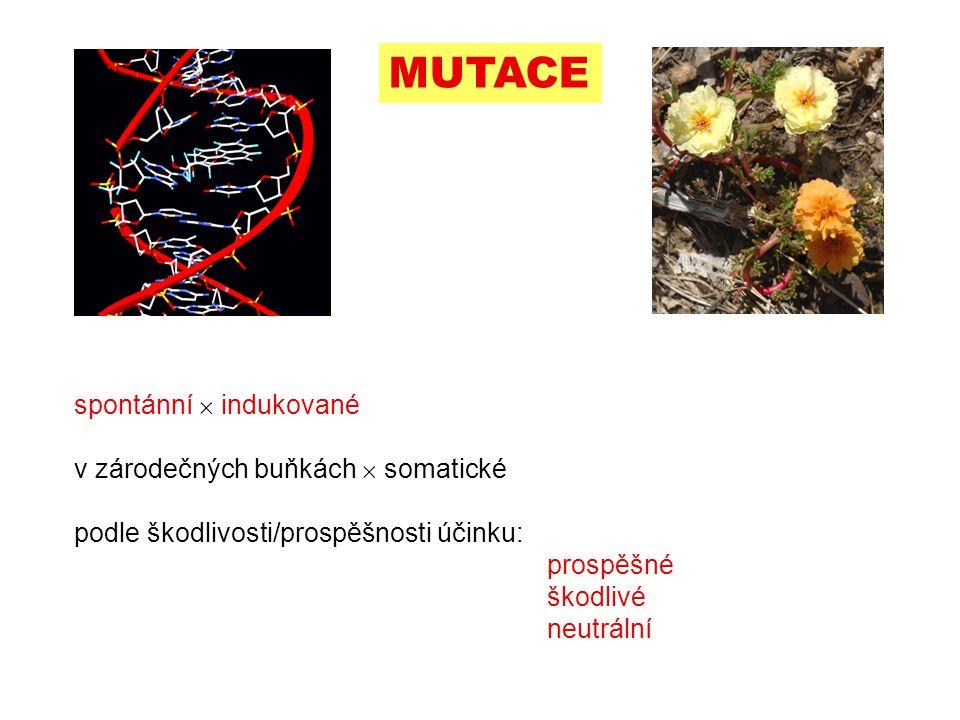 MUTACE spontánní  indukované v zárodečných buňkách  somatické