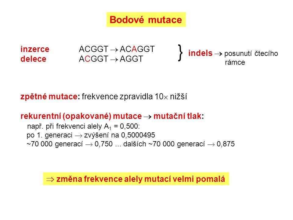 } Bodové mutace inzerce ACGGT  ACAGGT indels  posunutí čtecího