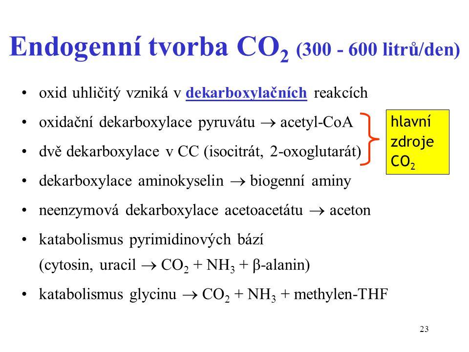 Endogenní tvorba CO2 (300 - 600 litrů/den)