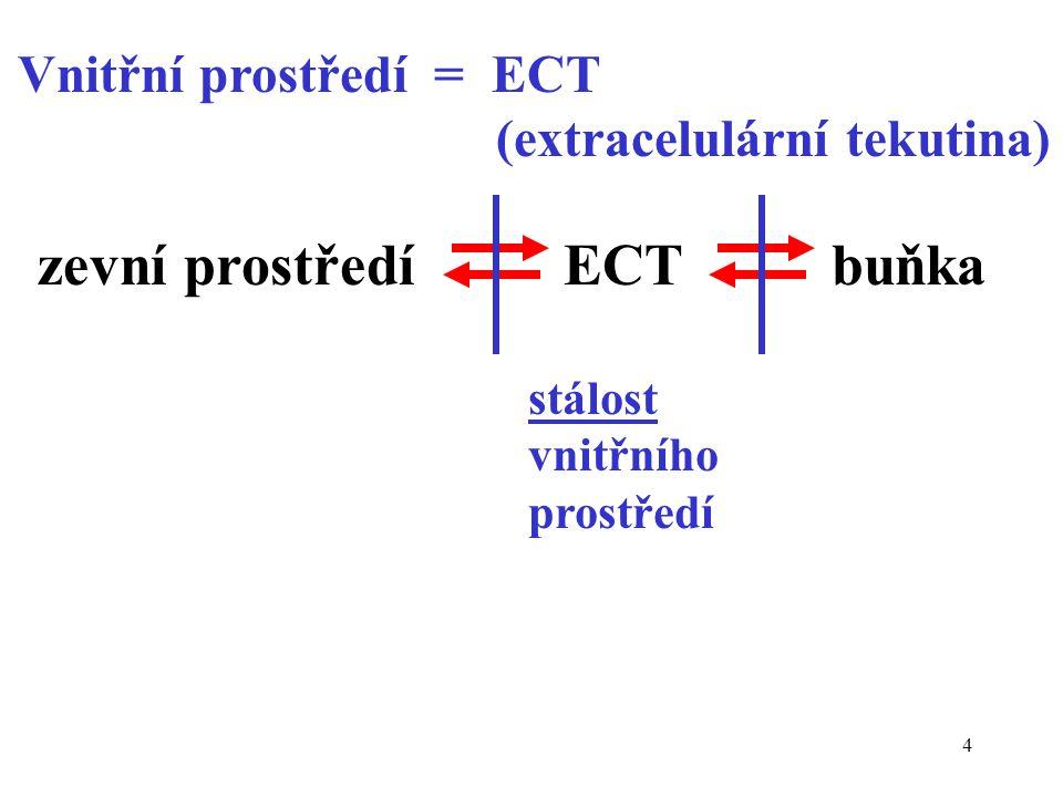 zevní prostředí ECT buňka